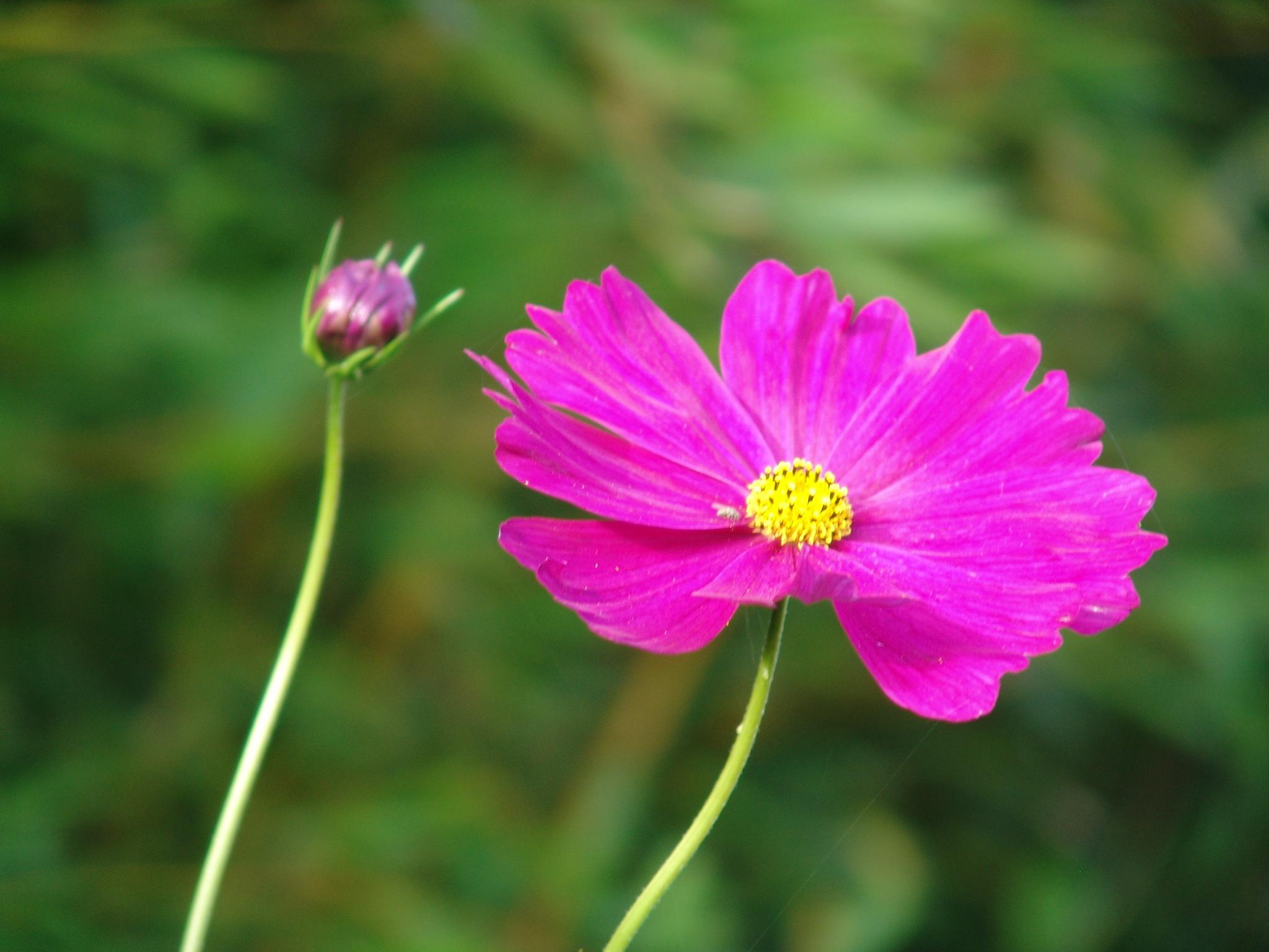 Retraite Innerlijke schoonheid